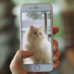 iPhone 6s and iPhone 6s Plus: How to Use Live Photos