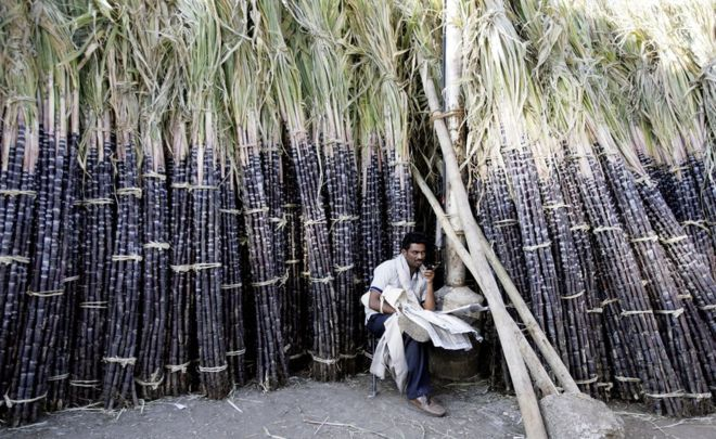 India election 2019: How sugar influences the world's biggest vote